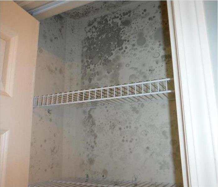 Mold growth in Tampa