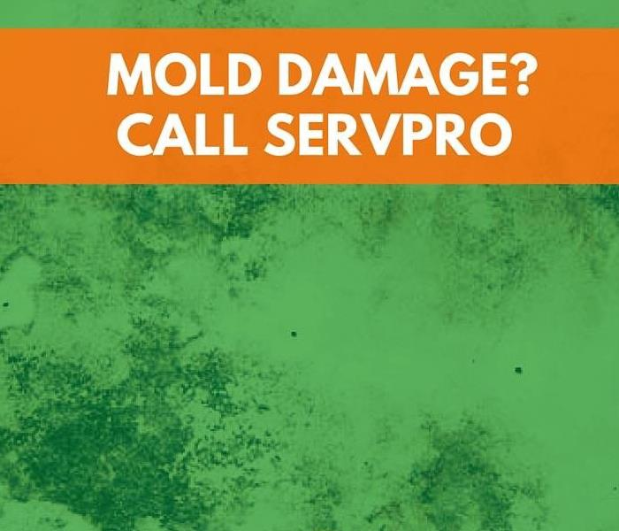 Mold Remediation Does Your Tampa Home Have A Mold Problem?